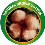 natural colour cotton